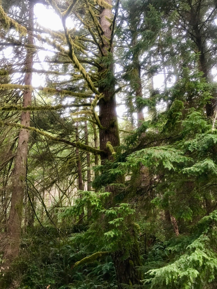 Deep forest on the Olympic Peninsula